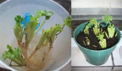 faire pousser interieur comment faire pousser des l 233 gumes et des fruits 13 plantes