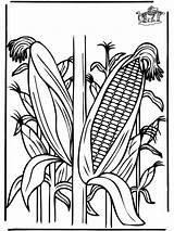 Coloring Corn Pages Crop Plants Funnycoloring Ohio Advertisement Library Clipart Clip Template sketch template