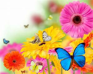 Spring Butterfly Wallpaper Background HD 7743 - HD ...
