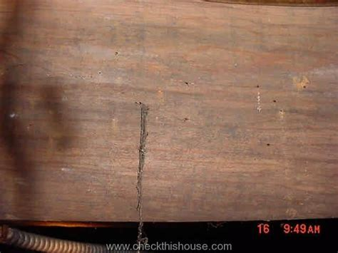 Termites and Other Crawlspace Bugs   CheckThisHouse
