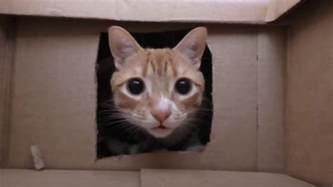 what of cat are you best cat owner builds his cats an epic cardboard box