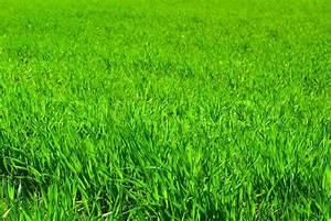 Lawn background | Stock Photo | Colourbox