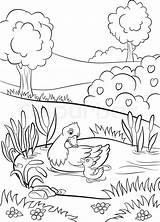 Coloring Pages Duck Pond Kind Trees Flowers Drawing Little Duckling Bushes Cute Summer Around Printable Vector Swim Print sketch template