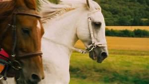 Bilder Zum Kaufen : 99 inspirierend ausmalbilder pferde mit reiterin galerie kinder bilder ~ Yasmunasinghe.com Haus und Dekorationen