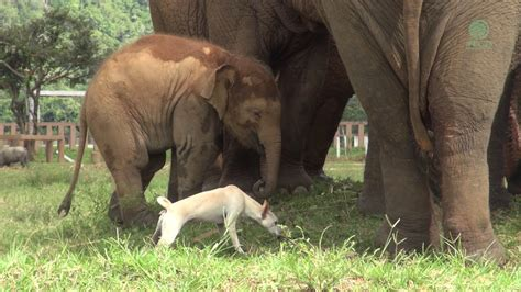 elephant cuisine elephants food vidshaker