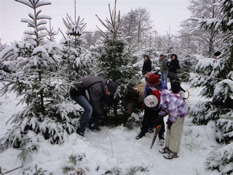 weihnachtsbaum selber schlagen schloss wissen