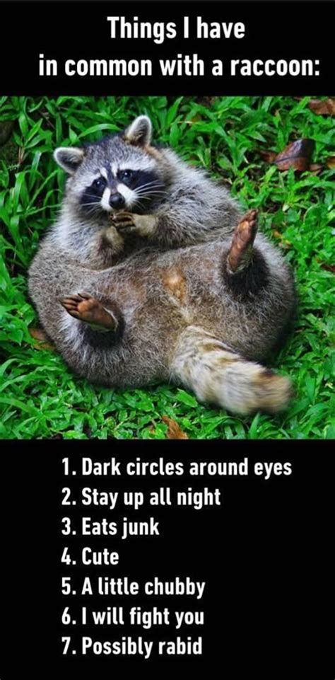 Funny Raccoon Meme - funny pictures of the day 40 pics funny pictures pinterest funny pictures racoon and