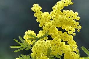 Die Farbe Gelb : die farbe gelb foto bild jahreszeiten fr hling blumen bilder auf fotocommunity ~ Watch28wear.com Haus und Dekorationen