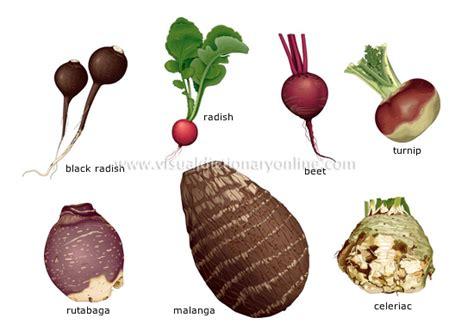 list of edible root root vegetables sensitiveeconomist