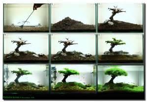 design aquarien aquascape of the month september 2008 quot pinheiro manso quot aquascaping world forum
