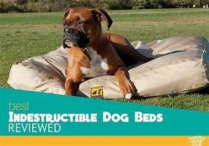 the 5 best indestructible dog beds compared the ultimate With dog beds for aggressive chewers