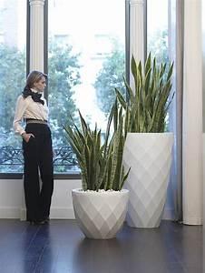 Palmen Für Drinnen : die besten 25 zimmerpflanzen ideen auf pinterest innen ~ Michelbontemps.com Haus und Dekorationen