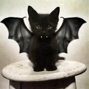bat cat costume a kitten dressed as a bat count catula what s not to