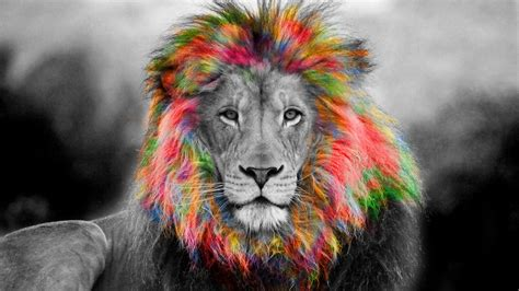 Colorful Animal Wallpaper - colorful hair animal hd wallpapers hd wallpapers rocks