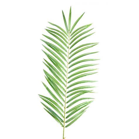 feuille palmier 60 et 110 cm feuillages branches baies reflets nature lyon