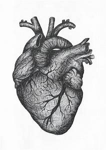 Real Heart Drawing - Cliparts.co