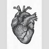 Anatomical Heart Tattoo Black And White | 1000 x 1416 jpeg 837kB