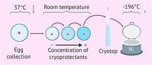 Cryopreservation Vitrification Of Embryos Sperm Eggs