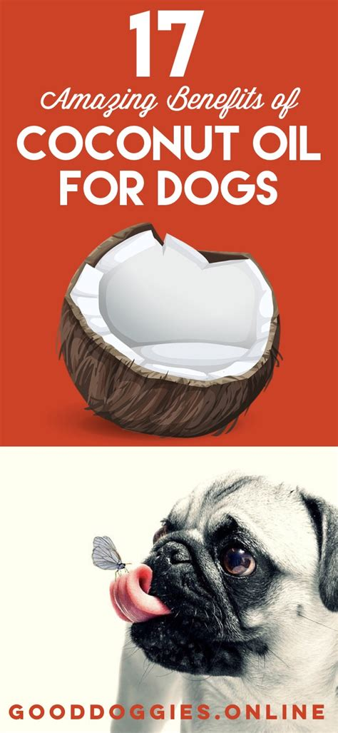 amazing benefits  coconut oil  dogs good doggies