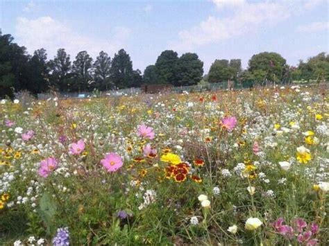 wildflower meadow picture  preston park brighton tripadvisor