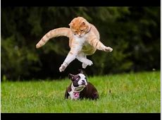 Lustige Katze Top 10 Katzen fails, Katzen #1 YouTube