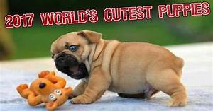 Top 10 World's Cutest Puppy Breeds for 2017 - The Dog Digest