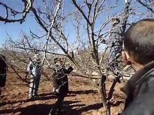 Taille De L Abricotier : taille arbres fruitiers abricotier rosac s avec maitre rahi maamar 1 7 youtube ~ Dode.kayakingforconservation.com Idées de Décoration