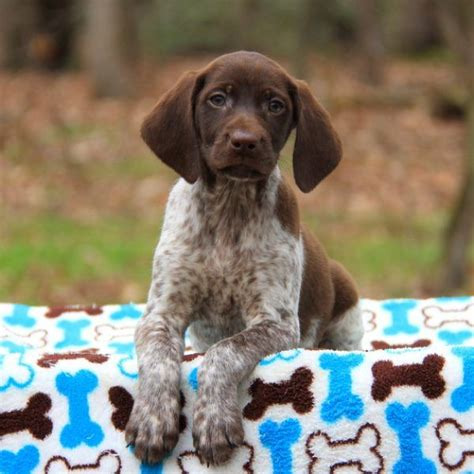 217 best images about puppies of the day on