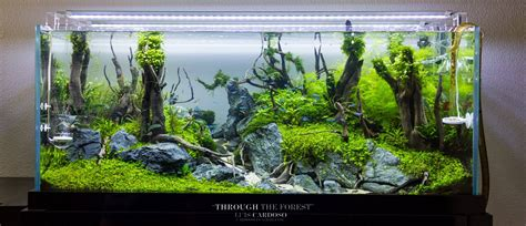Aquascape Ideas by Aquascape Idea 6 Meowlogy