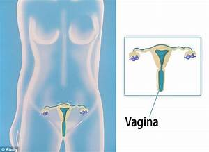 Just Half Of Women Can Locate The Vagina On A Diagram Of