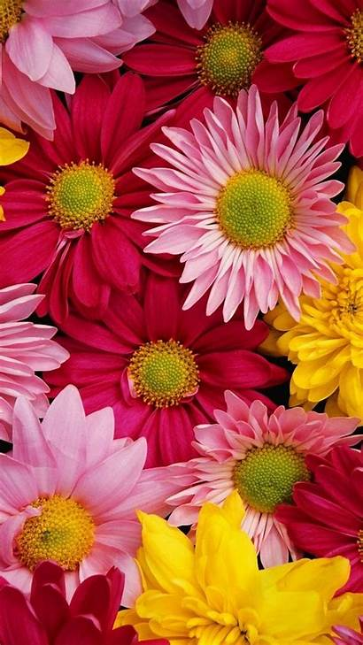Iphone Flower Floral Wallpapers Colorful Mobile Spring