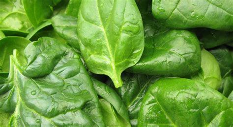 cuisine en soldes epinard plantation entretien et récolte