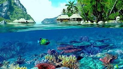 Reef Coral Wallpapers Ocean Underwater Beach Fish