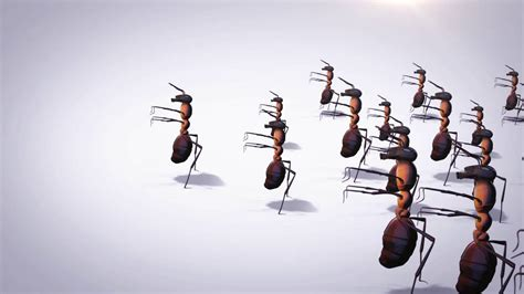 zombie ants ripley believe