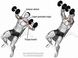 Incline Dumbbell Bench Press Instructions And Video