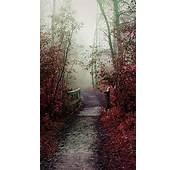 Misty Autumn Path Android Wallpaper Free Download