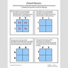Best 25+ Punnett Square Activity Ideas On Pinterest  Genetics Traits, Biology Classroom And Mitosis