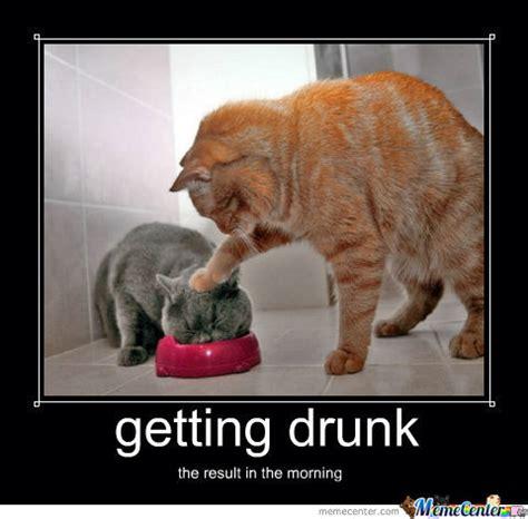 Drunk Birthday Meme - cat got drunk by brundy10 meme center