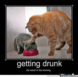 Cat Got Drunk by brundy10 - Meme Center