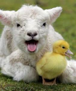 Cute Farm Animals Pictures | www.pixshark.com - Images ...