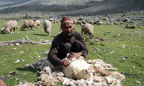 jks revenue  generated  agriculture