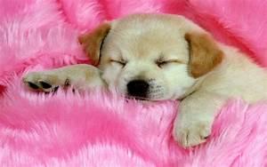 Dog Wallpaper Sleep Cute #10482 Wallpaper   WallDiskPaper