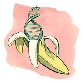find  dna   banana scientific american easy