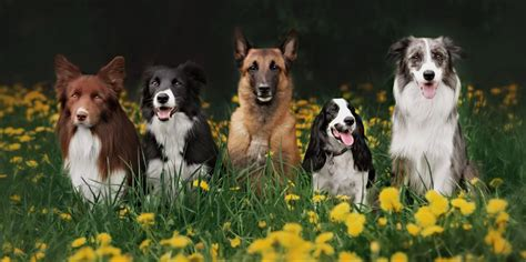 dog breed    data science
