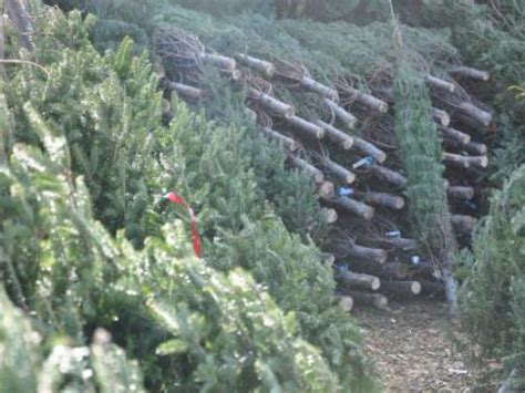 christmas tree farms in cobb county kennesaw ga patch