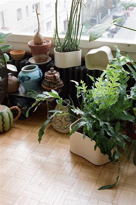 Zimmerpflanzen Wenig Wasser by Gr 252 Ne Oase F 252 R Drinnen Warum Der Trend Zu Zimmerpflanzen
