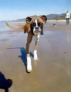 Two legs good: Having only front legs is no obstacle to ...