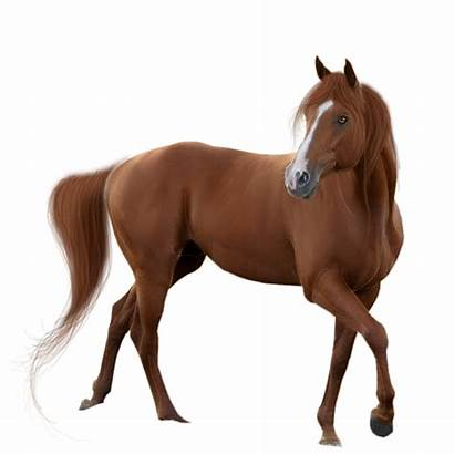 Horse Transparent Background Pngmart Type