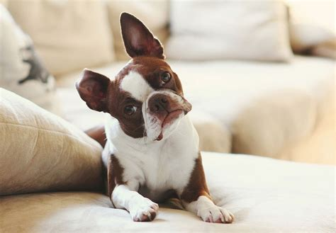 how to remove dog hair from sofa tips for preventing and removing pet hair buildup