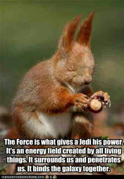 17 Star Wars squirrels ideas   star wars, star wars humor, war